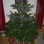 Minijuletre 23. desember 2010