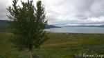 Bare et tre i skråninga til Russefjellet