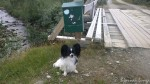 En stopp ved trimkassa ved Rottelvbrua, måtte jo skrive i trimboka
