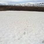 Under snøen renner en bekk, litt skummelt å gå over her da