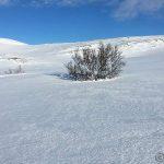 En liten treklynge i winter wonderland