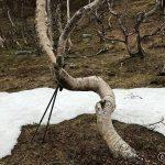 Fant treet som æ bruke som rasteplass
