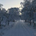 Trærne bøyer seg nesten ned på veien