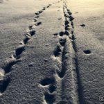 ...kan ikke de fordømte skientusiastene slutte å gå i fotsporene mine 😂😂😂