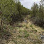 Stien ved NRS mot Storjord begynner å gro igjen