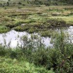En liten vannpytt ved Rottelvbrua, et skikkelig myggklekkeri dette