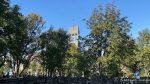 Bærtunge trær med kirketårnet i bakgrunnen