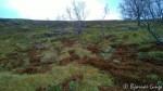 På nedsiden av Rottoppen var disse merkverdige greiene, jordris som er helt brun