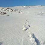 Spor i snø.