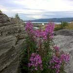 Flere vakre blomster, denne gangen ved Kokelva