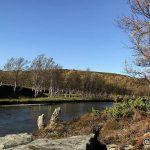 Et bilde nedover elva fra der æ satt