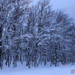 Skogen i Russelvdalen har eventyrhvit bekledning