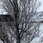 Selv trærne fikk sæ et tykt lag med is på grenene