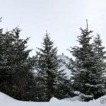 Fjellet Tyven mellom juletrærne