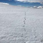 Flott å gå på fjellet og spesielt på snøen, når den er så hard som nå