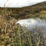 Et lite vann ved Rottelvbrua, dvs. det er vel egentlig en lite myrpytt