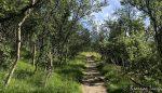 Opp langs Gammelveien gjennom Jansvannskogen